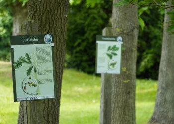 Stadt Mansfeld - OT Annarode - Arboretum Annarode