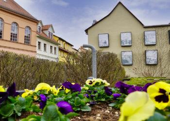 Lutherstadt Eisleben - Ohrenweide