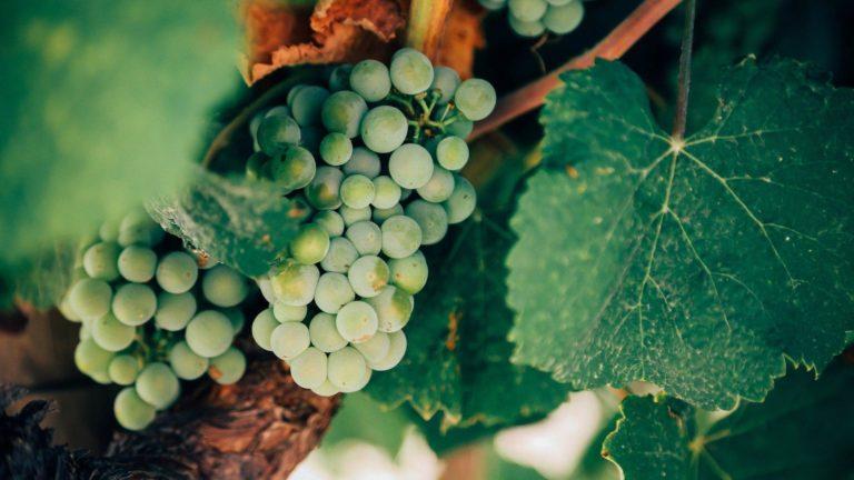 Seegebiet Mansfelder Land - Weingüter
