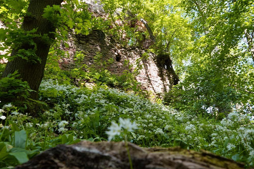Grillenberg - Ruine Grillenburg