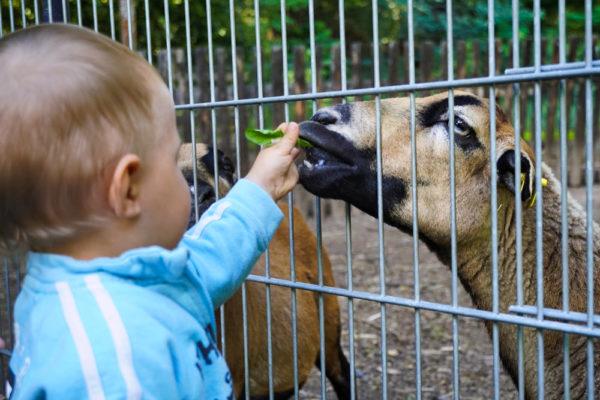 Hettstedt Tierpark Walbeck