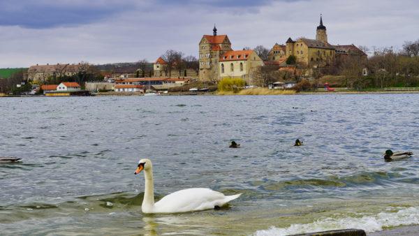 Seegebiet Mansfelder Land Schloss Seeburg