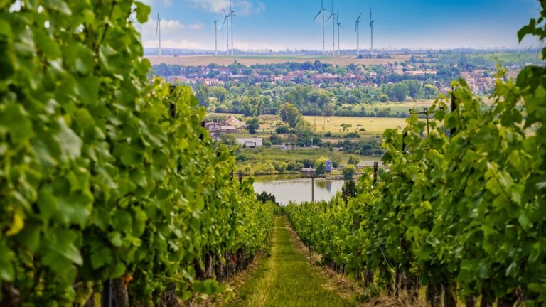 Seegebiet Mansfelder Land - Weinberge und Windräder
